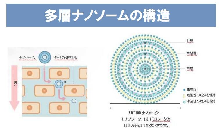 多層ナノソームの構造